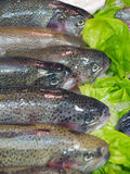 新鲜的三文鱼 库存照片