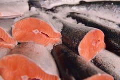 新鲜的三文鱼 库存图片