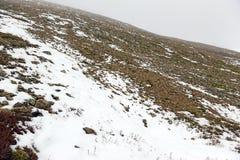 新鲜的下落的雪在落矶山 库存图片