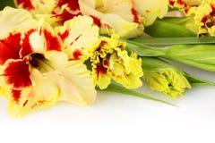 新鲜的五颜六色的剑兰被隔绝的水平 免版税图库摄影