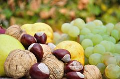 新鲜的五颜六色的秋天水果和蔬菜细节  免版税图库摄影