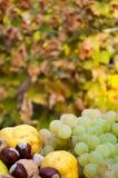 新鲜的五颜六色的秋天水果和蔬菜细节 免版税库存图片