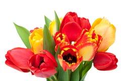 新鲜的五颜六色的郁金香花束 图库摄影