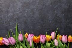 新鲜的五颜六色的郁金香花 库存图片