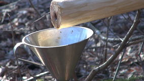新鲜的健康桦树树汁在金属漏斗滴下 影视素材
