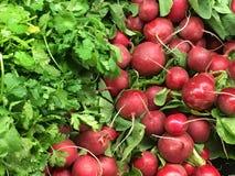 新鲜的农厂采撷甜菜 免版税库存图片