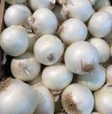 新鲜的农厂采撷白洋葱 库存图片