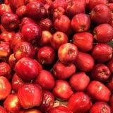 新鲜的农厂采撷红色苹果 免版税库存图片