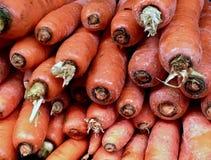 新鲜的农厂采撷红萝卜 库存图片