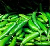 新鲜的农厂采撷jalapeño胡椒 库存照片
