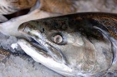 新鲜的冰三文鱼 免版税库存图片