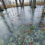 新鲜的冻绿叶 库存照片