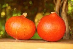 新鲜的南瓜在秋季庭院里 免版税库存图片