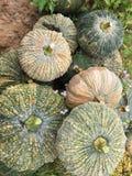 新鲜的南瓜被保留在庭院外面 库存照片