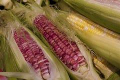新鲜的印第安玉米在温哥华的Grandville海岛市场上 库存照片