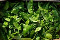 新鲜的印第安纹理蔬菜 库存图片