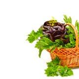新鲜的卷曲莴苣,水田芥,菠菜堆用荷兰芹我 免版税库存图片