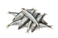 新鲜的原始的沙丁鱼 免版税库存图片