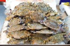 新鲜的原始的花螃蟹或青蟹在市场上 库存照片