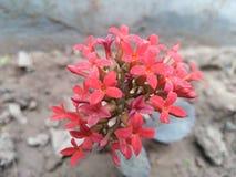 新鲜的发光的花 库存照片