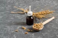 新鲜的发芽的麦子种子和麦芽上油 免版税库存照片