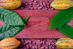 新鲜的可可粉和CocoaBean 免版税图库摄影