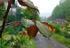 新鲜的叶子在村庄在春天分支 免版税库存图片