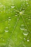 新鲜的叶子水投下背景 免版税库存照片