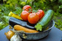 新鲜的各种各样的菜为装饰,汤,烹饪盘 库存图片