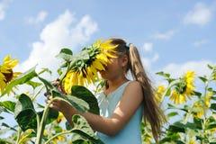 新鲜的向日葵 免版税图库摄影