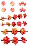 新鲜的咖啡豆隔绝了白色背景 免版税图库摄影