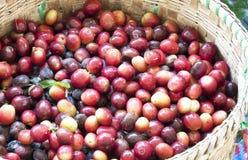新鲜的咖啡豆 免版税库存图片