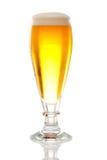 新鲜的啤酒 库存照片