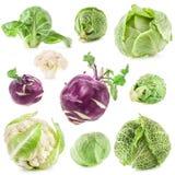 新鲜的圆白菜的汇集 库存照片