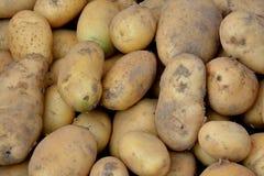 新鲜的土豆 免版税库存图片