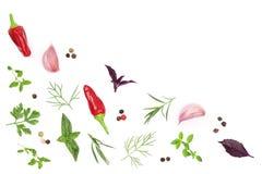 新鲜的在与拷贝空间的白色背景隔绝的香料和草本您的文本的 莳萝荷兰芹蓬蒿麝香草顶视图 免版税库存照片