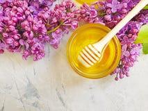 新鲜的在灰色具体背景的蜂蜜淡紫色花 库存图片