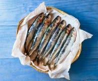 新鲜的地中海沙丁鱼 库存图片
