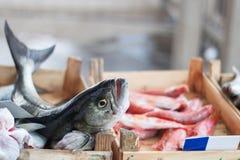 新鲜的地中海鱼 库存照片