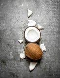 新鲜的坚硬椰子 库存照片