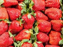 新鲜的堆草莓 免版税库存图片