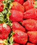 新鲜的堆草莓 库存照片