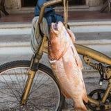 新鲜的墨西哥红鲷鱼: 库存照片