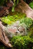 新鲜的复活节彩蛋在日出的森林里 库存图片