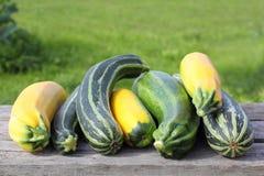 新鲜的夏南瓜在庭院里 图库摄影