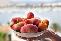 新鲜的夏天杏子和桃子在一个碗在手上 库存图片