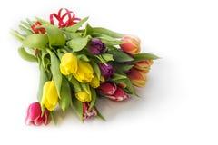 新鲜的多色郁金香花花束  免版税库存照片