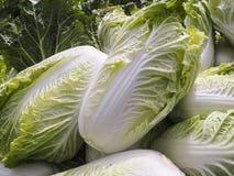 新鲜的大白菜在庭院里 免版税库存图片