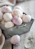 新鲜的大蒜 库存图片