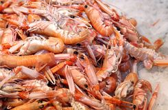新鲜的大虾和虾在冰待售在鱼市上 库存照片